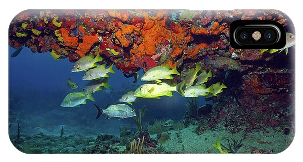 Schooling Fish At Calf Rock IPhone Case