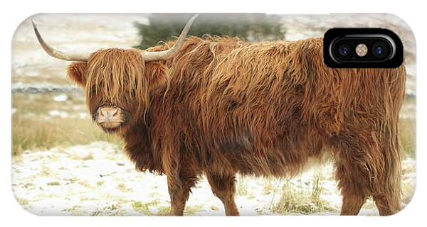 Scottish Red Highland Cow In Winter IPhone Case