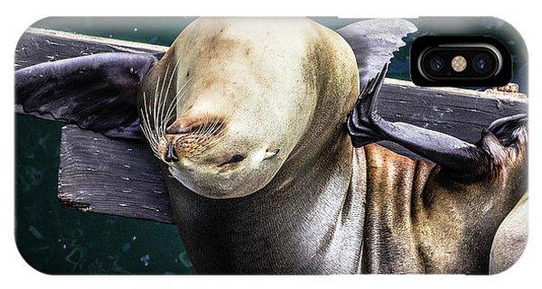 California Sea Lion - Scratch The Itch IPhone Case