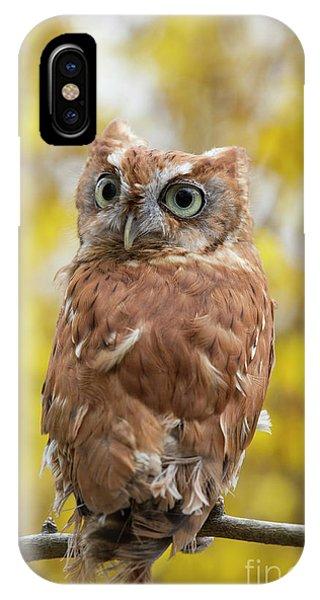 Screech Owl 1 IPhone Case