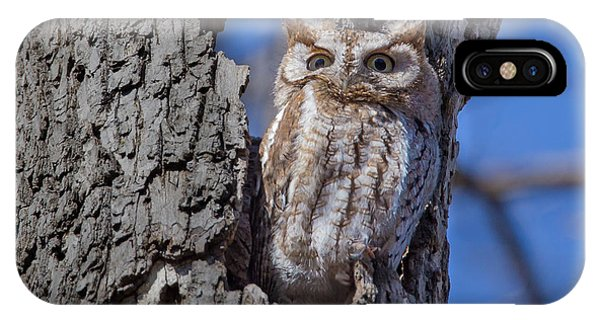 IPhone Case featuring the photograph Screech Owl #1 by Paul Schultz