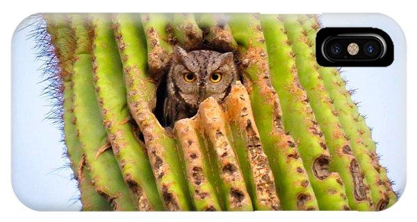 Screech Owl In Saguaro IPhone Case