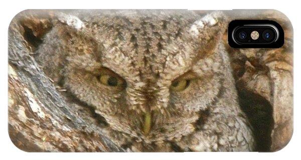 Screech Owl On Spring Creek IPhone Case