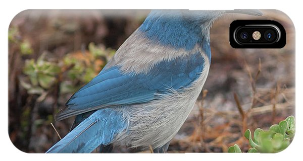 Scrub Jay Framed In Green IPhone Case