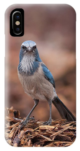 Scrub Jay On Chop IPhone Case