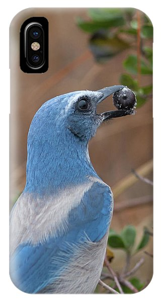 Scrub Jay With Acorn IPhone Case