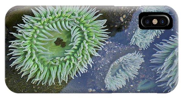 Sea Anemones IPhone Case