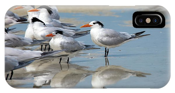 Sea Birds IPhone Case