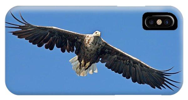 Sea Eagle IPhone Case