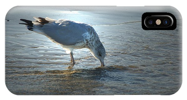 Sea Gull At Sundown IPhone Case