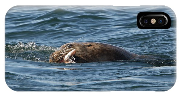 Sea Lion Meal IPhone Case