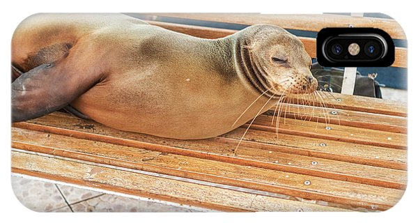 Sea Lion On A Bench, Galapagos Islands IPhone Case