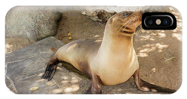 Sea Lion On The Beach, Galapagos Islands IPhone Case
