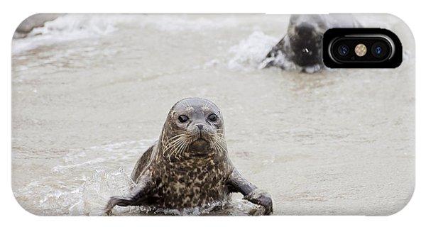 Sea Lion Pup Phone Case by Eddie Yerkish