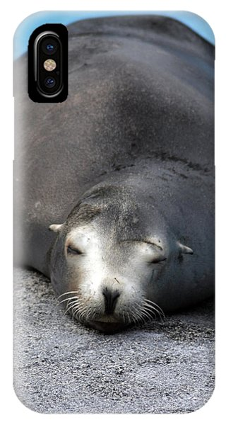 Sea Lion Snooze IPhone Case