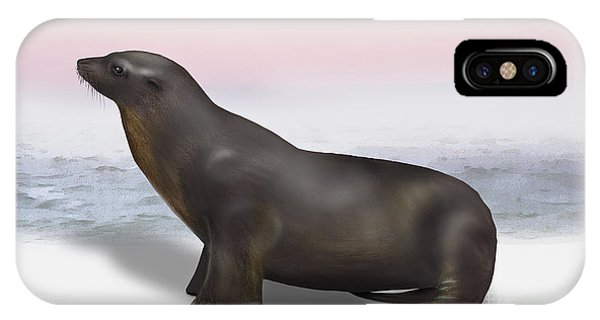 Sea Lion Zalophus Californianus - Marine Mammal - Seeloewe IPhone Case