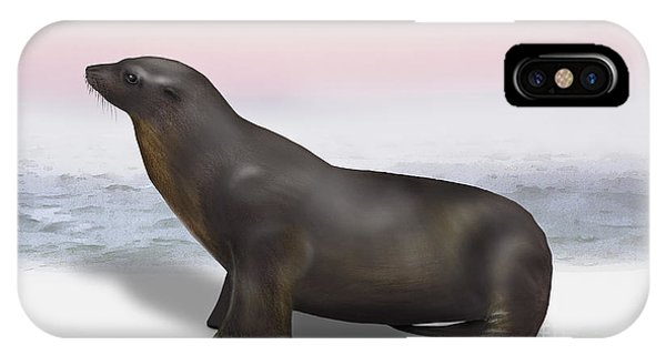 Sea Lion Zalophus Californianus - Marine Mammal - Seeloewe IPhone Case