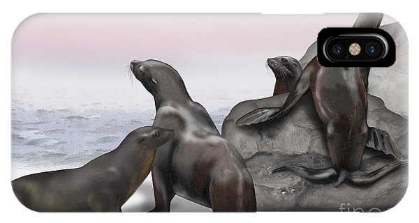 Sea Lion Zalophus Californianus - Marine Mammals - Seeloewen IPhone Case
