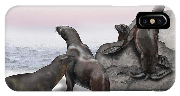 Sea Lion Zalophus Californianus - Marine Mammals - Seeloewen IPhone Case