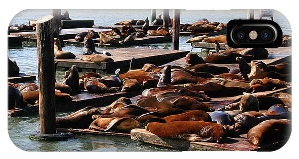 Sea Lions At Pier 39 In San Francisco IPhone Case