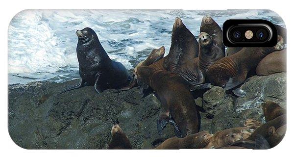 Sea Lions IPhone Case
