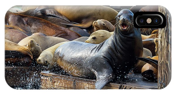 Sea Lions On The Floating Dock In San Francisco IPhone Case