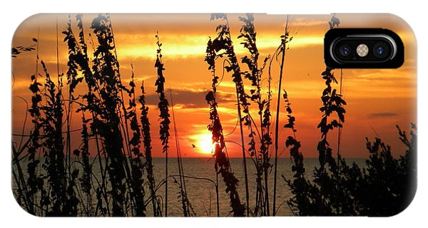 Sea Oats In The Sun IPhone Case