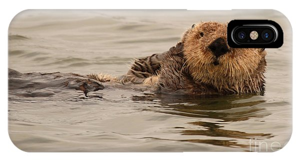 Sea Otter All Cuddled Up Phone Case by Max Allen