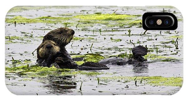 Sea Otters 1 IPhone Case
