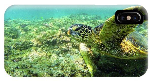 Sea Turtle #2 IPhone Case