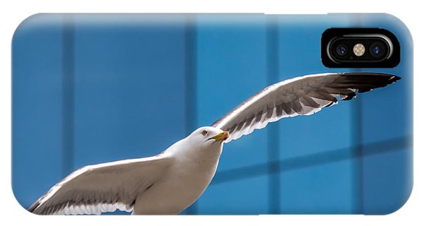 Seabird Flying On The Glass Building Background IPhone Case
