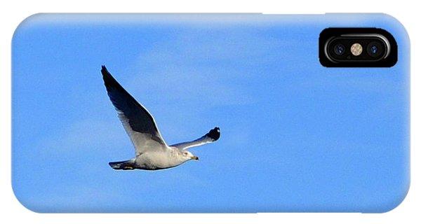Seagull In Flight IPhone Case