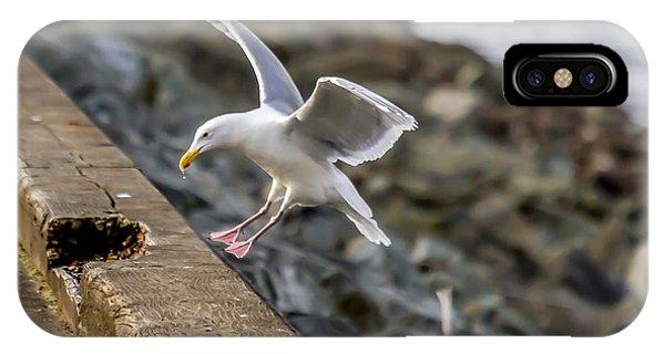 Seagull Landing IPhone Case