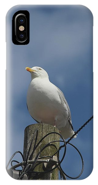 Seagull Perching. IPhone Case