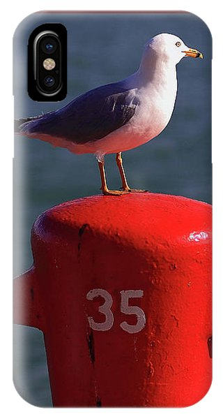 Seagull Number 35 IPhone Case