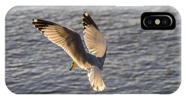 Seagull Over Cape Fear River IPhone Case