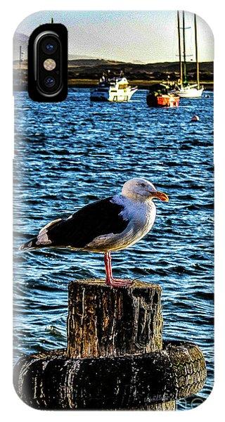 Seagull Perch IPhone Case