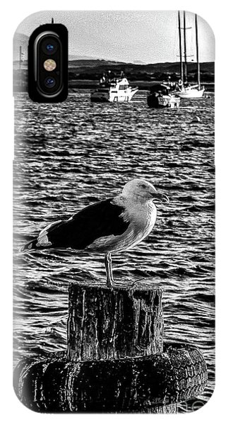 Seagull Perch, Black And White IPhone Case