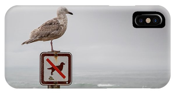 Seagull Standing On Sign And Looking At The Ocean IPhone Case