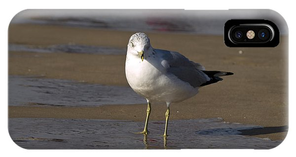 Seagull Standing IPhone Case