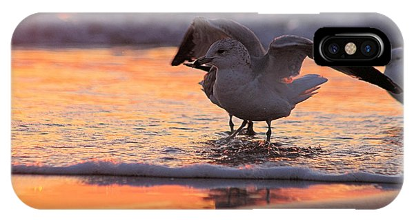 Seagull Stretch At Sunrise IPhone Case