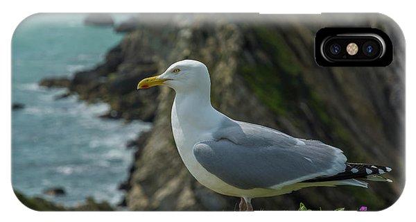 Dorset iPhone Case - Seagull  by Tsafreer Bernstein