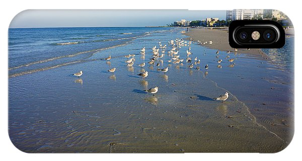 Seagulls And Terns On The Beach In Naples, Fl IPhone Case