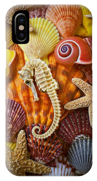 Seahorse iPhone Case - Seahorse And Assorted Sea Shells by Garry Gay