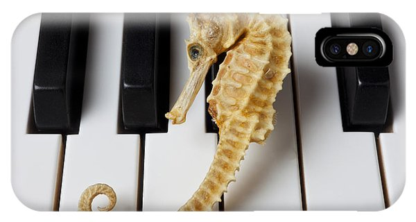 Seahorse iPhone Case - Seahorse On Keys by Garry Gay