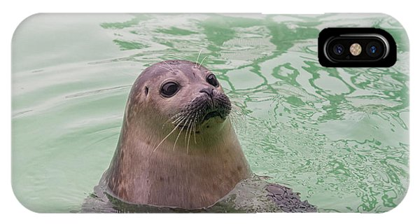 Seal In Water IPhone Case