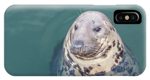 Seal With Long Whiskers With Head Sticking Out Of Water IPhone Case