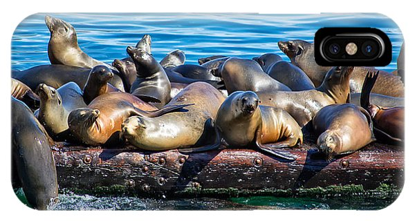 Sealions On A Floating Dock Another View IPhone Case
