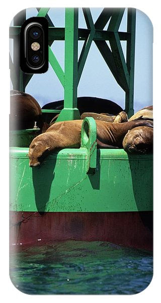 Seals On Channel Marker IPhone Case