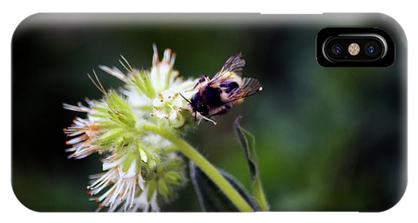 Searching For Pollen IPhone Case